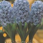 Delft Blue 735